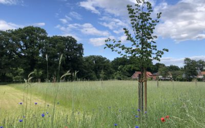 Blühende Artenvielfalt auf der Hörenbergwiese